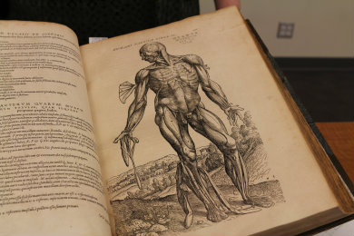 Anatomical Images from Inside Andreas Vesalius' Fabrica
