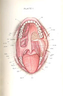The Surgery of Oral and Facial Diseases by George Van Ingen Brown
