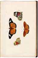 Illustrations of exotic Entomology by D. Drury