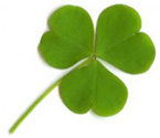Shamrock - One of Ireland's most recognized National Symbols/