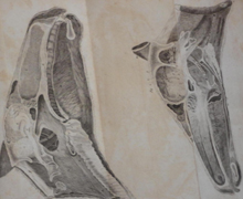 The Outlines of the Veterinary Art by Delabere Blaine (1802)