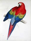 Illustrations of the Family of Psittacidae/Parrots by Edward Lear