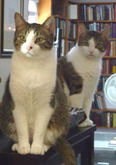 Noodle and Freddie of Weiser Antiquarian Books