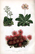 Alpine Plants by David Wooster