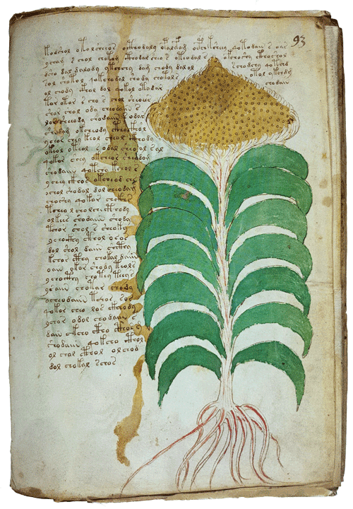 lisas world the voynich manuscript